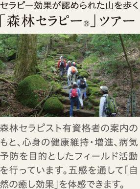 セラピー効果が認められたやmを歩く「森林セラピー」ツアー